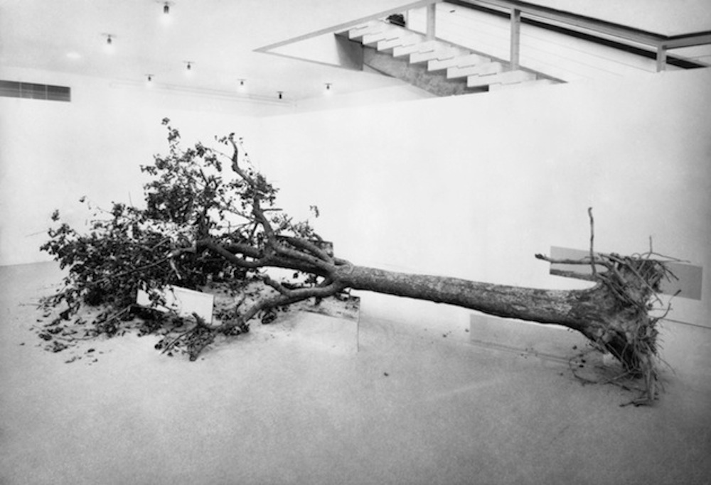 Robert Smithson, Dead Tree, 1969