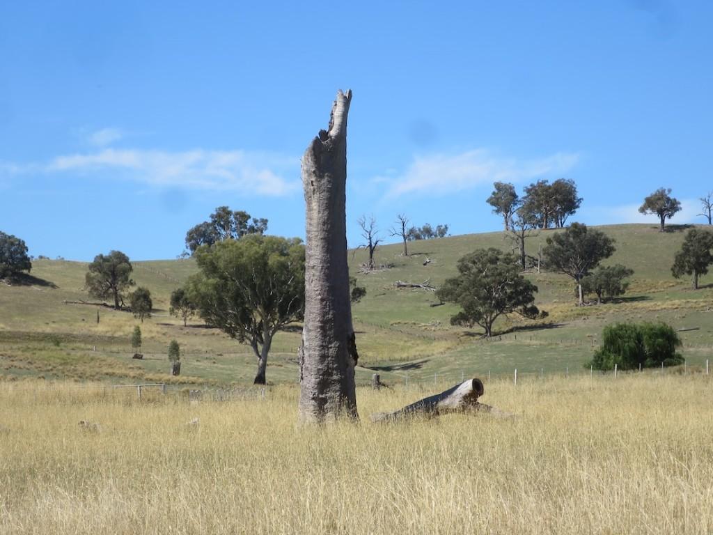 Diana Marrone, Solitary Trees series