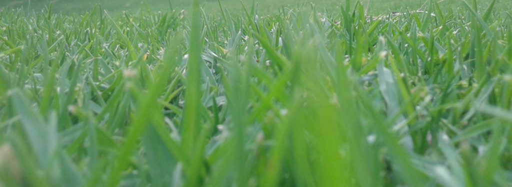 grass, Melbourne