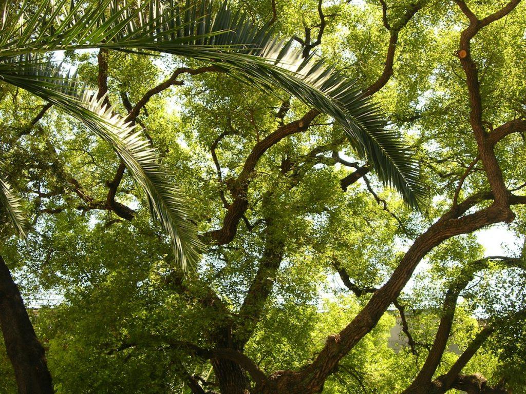 Neapolitan Garden